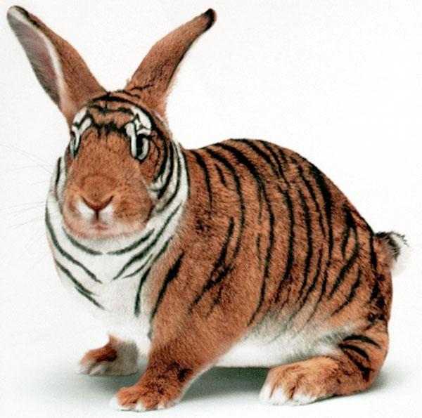 tigerbunnykr7